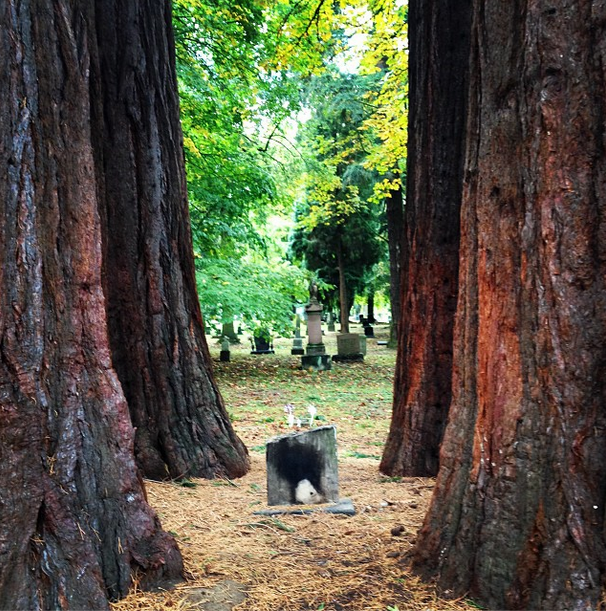 HeadstoneTrees